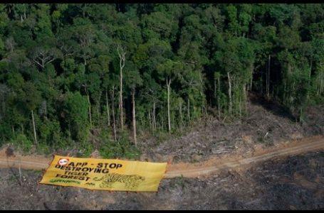 Dorong Sustainable Development, Pemerintah Bentuk Aliansi Eko-Kawasan Sumsel