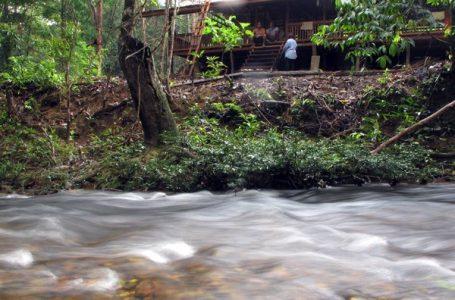 Hutan Adat, Supermarket Masyarakat Dayak Iban