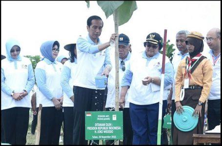 Hari Menanam Pohon Nasional, Jokowi Ajak Masyarakat Tanam Pohon