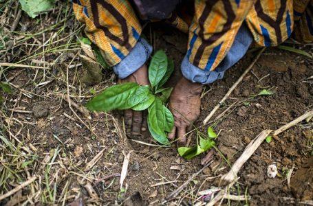 Konvensi Kehati PBB, CIFOR Tegaskan Untuk Fokus Pada Perbaikan Lanskap Hutan