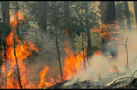 Ilustrasi Kebakaran Hutan (Gambar: Mongabay)