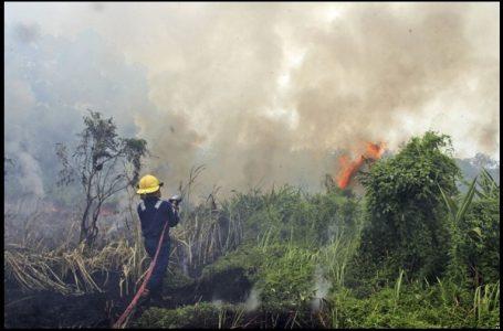 Seorang petugas pemadam kebakaran berupaya memadamkan api kebakaran hutan di Pekanbaru {Gambar: VOA Indonesia}