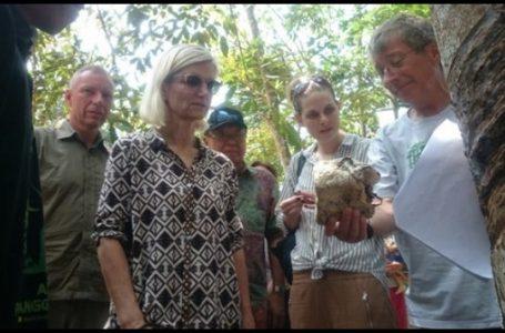 Mentri Kerjasama dan Pembangunan Denmark Ulla Tornaes didampingi Dubes Denmark di Hutan Harapan, Jambi, Senin (1/05) {Foto: Dedi Nurdin/TribunJambi}