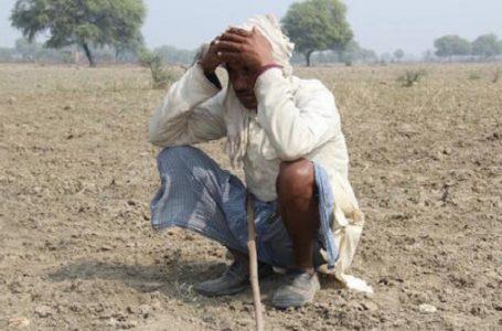 Seorang petani di Uttar Pradesh, India bagian Utara (Gambar: UCANews)
