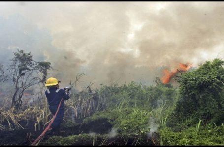 Kalimantan Selatan dan Riau Perpanjang Status Siaga Karhutla