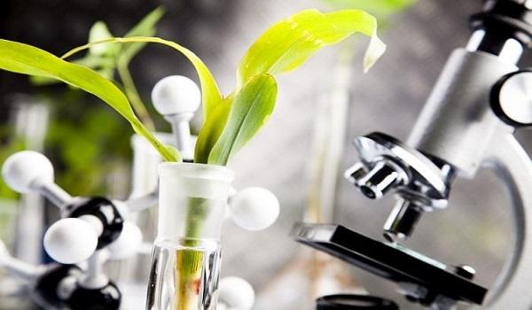 Lindungi Ketahanan Pangan, AS Lakukan Revisi Peraturan Terhadap Produk Bioteknologi