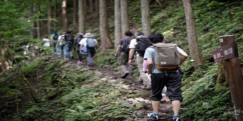 Permandian Hutan: Tren Baru Penduduk Jepang Mencari Ketenangan