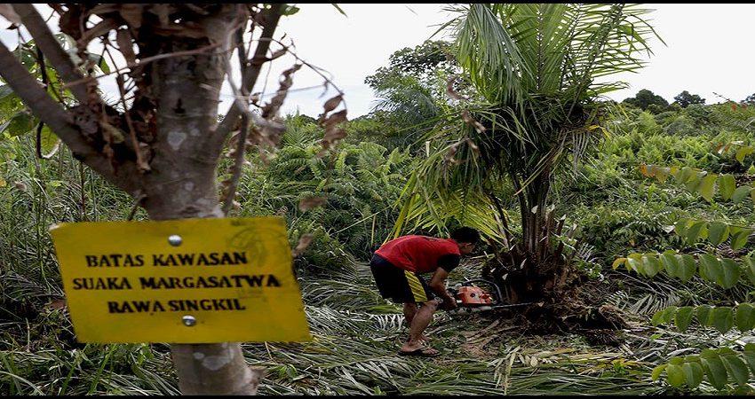 SM Rawa Singkil Akhirnya Terbebas dari Kebun Sawit