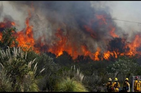 Ilustrasi kebakaran hutan di Pulau Sumatera (Gambar: Liputan6.com)