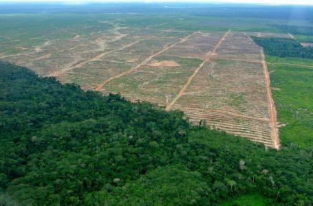 Merek-Merek dan Bank-Bank Besar Dunia Disoroti Karena Memicu Deforestasi dan Pelanggaran Hak Masyarakat