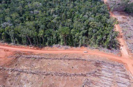 [:en]Pembukaan perkebunan kelapa sawit oleh perusahaan Korindo di Papua (Foto: Mighty Earth)[:]